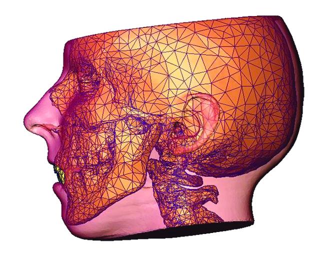 Биомеханическое моделирование